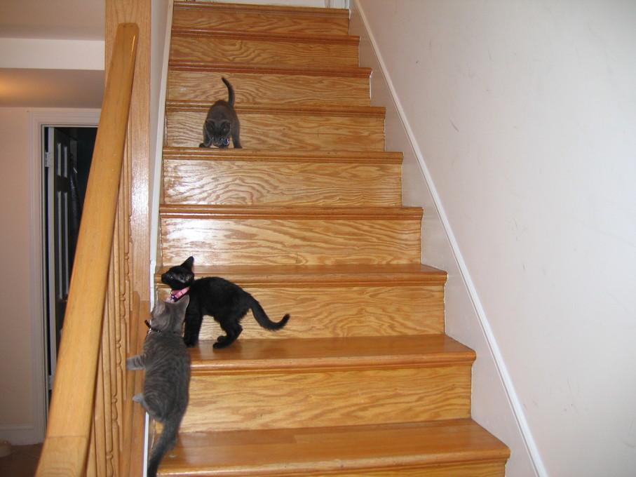 all three kittens playing on the basement stairs basement stairway lighting